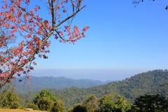 Berge und Blumen lizenzfreies stockfoto