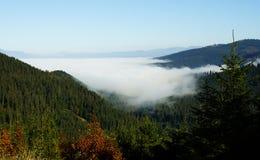 Berge und der Kieferwald, der mit Wolken bedeckt wird, nebeln ein Stockfotografie