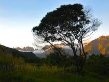 Berge und eine Wiese Stockfotografie