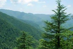 Berge und Kiefern im Himalaja Lizenzfreie Stockfotos
