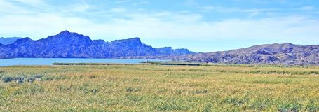 Berge und Marsh Beside Colorado River lizenzfreies stockfoto