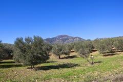 Berge und Olivenhaine ofl Andalusien Lizenzfreies Stockfoto