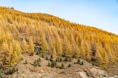 Berge und Wälder im Herbst stockfotografie