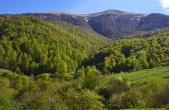 Berge und Wald im Frühjahr Stockfotografie