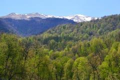 Berge und Wald im Frühjahr Stockfotos