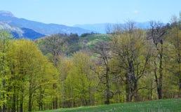 Berge und Wald im Frühjahr Lizenzfreies Stockfoto
