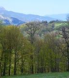 Berge und Wald im Frühjahr Stockfoto