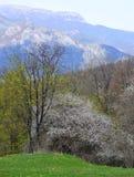 Berge und Wald im Frühjahr Lizenzfreies Stockbild