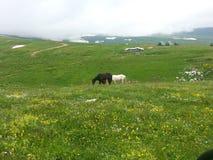 Berge und Wiesen, weiden lassende Pferde lizenzfreies stockfoto