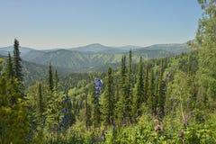 Berge von Kuznetsky Alatau Stockfoto