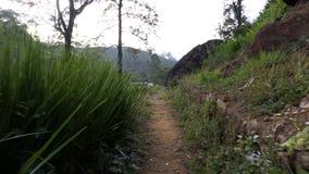 Berge von nuwara eliya Sri Lanka stock footage