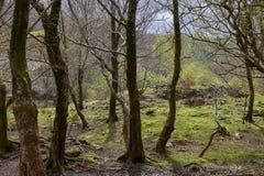 Berge in Wales lizenzfreie stockfotos