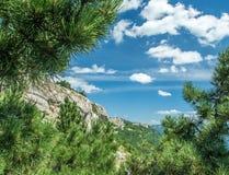 Berge werfen die Blätter Stockfoto