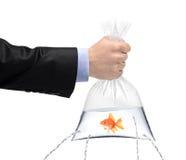 Übergeben Sie das Anhalten eines goldenen Fisches in einem Beutel mit Löchern Lizenzfreies Stockbild
