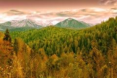 Bergen av det norr Kaukasuset Royaltyfri Foto