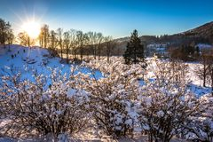 Snowy Trees, The Sun, White Snow and Blue Sky at Gamlehaugen, Bergen, Hordaland, Norway royalty free stock photography