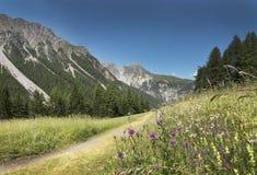 Bergen in de Alpen met bloemen bij d'Uina van valleival royalty-vrije stock afbeelding