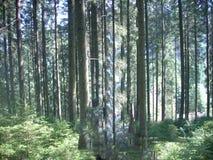 Bergen, de Karpaten, de Oekraïne, groen bos, bomen, verse lucht Stock Foto's