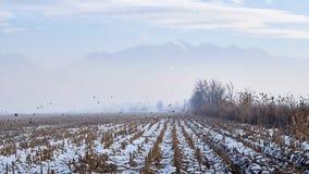 Bergen in de mist stock afbeeldingen