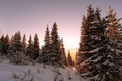 bergen in de winterzonnen Royalty-vrije Stock Foto's