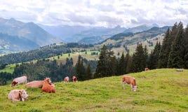Bergen in de Zwitserse alpen Stock Foto's