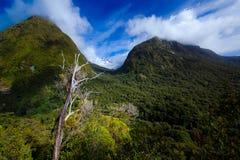 Bergen die door bossen worden behandeld royalty-vrije stock foto