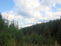 Bergen die met bossen worden behandeld Stock Afbeelding