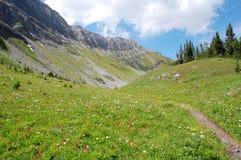 Bergen en alpiene weide Stock Foto