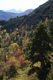 Bergen en bomen in de Pyreneeën Stock Fotografie