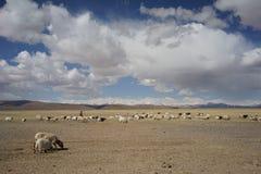 Bergen en geiten in Tibet Stock Afbeeldingen