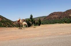 Bergen en Kamelen royalty-vrije stock afbeelding