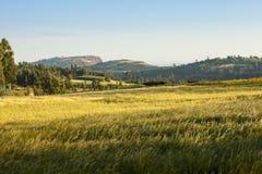 Bergen en landbouwbedrijf in Ethiopië Royalty-vrije Stock Foto