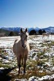 Bergen en paarden stock afbeeldingen