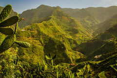 Bergen in het Landelijke Park van Anaga, Tenerife Royalty-vrije Stock Foto's