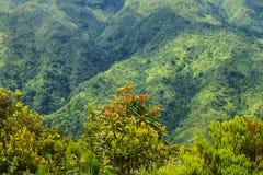 bergen i norden av ön av madeiran Royaltyfri Fotografi