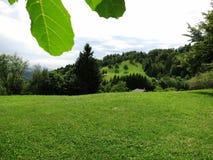 Bergen landskape tijdens de zomer stock foto