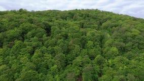 Bergen met bos worden behandeld dat stock video