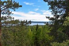 Bergen met veel bomen worden behandeld die royalty-vrije stock fotografie