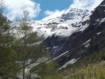 Bergen och skogen Arkivbild