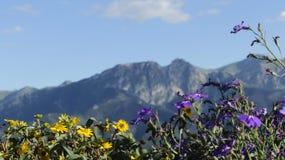 Bergen op de achtergrond van bloemen Stock Afbeeldingen