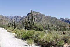 Bergen in Tucson, Arizona stock fotografie