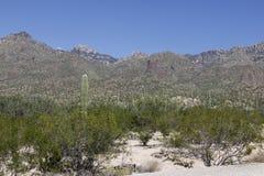 Bergen in Tucson, Arizona stock foto's