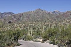 Bergen in Tucson, Arizona stock afbeelding