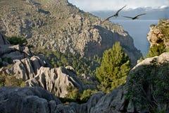 Bergen van Majorca Royalty-vrije Stock Foto