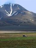 Bergen van Spitsbergen stock fotografie
