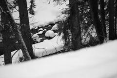 Bergen - Zakopane in de winter Royalty-vrije Stock Afbeelding