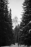 Bergen - Zakopane in de winter Stock Afbeelding