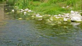 Bergenbeek of de zomerrivier stock video