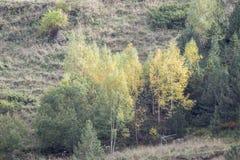 bergenhoogtepunt van vegetatie in de herfst Stock Afbeelding