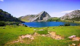 Bergenlandschap met meer en weiland Stock Foto